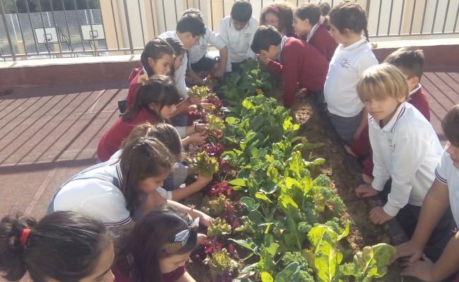 educacion-agricola-2